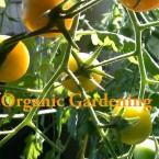 Organic-Garden