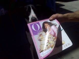 Oprah Winfrey Fan - Dog San Francisco